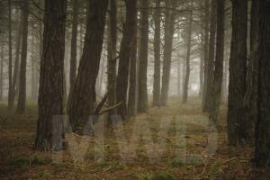 skanor-skog-1